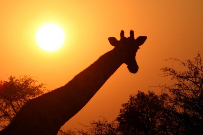 Namibia. Arenas del Namib, etnias del norte y vida salvaje en Etosha. Yolanda Fernando