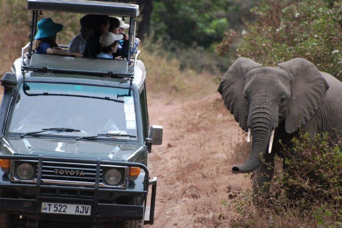 Reservas del Valle del Rift y Zanzíbar. Foto Daniel Erbas