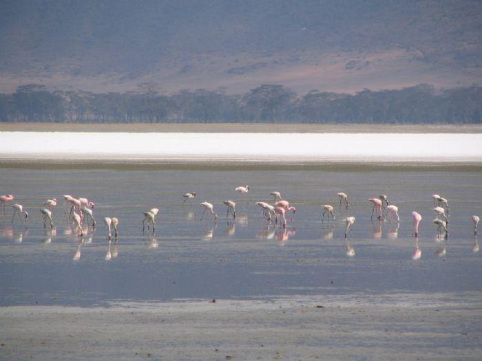 Reservas del Valle del Rift y Zanzíbar. Foto J. Espuny