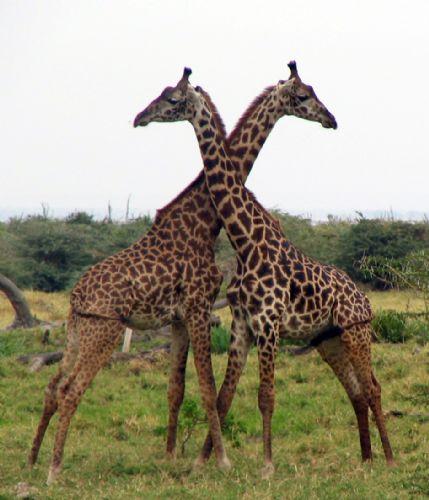 Reservas del Valle del Rift y Zanzíbar. Foto M. Mora