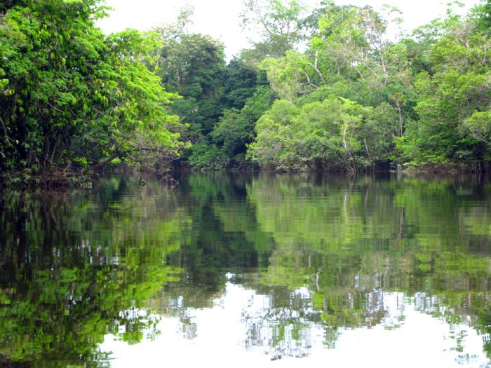 Expedición a la Amazonia brasileña. Foto Concepcio Sole.