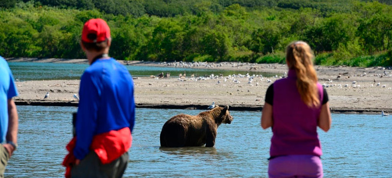 Cerca de los osos en el lago Kurilskoye