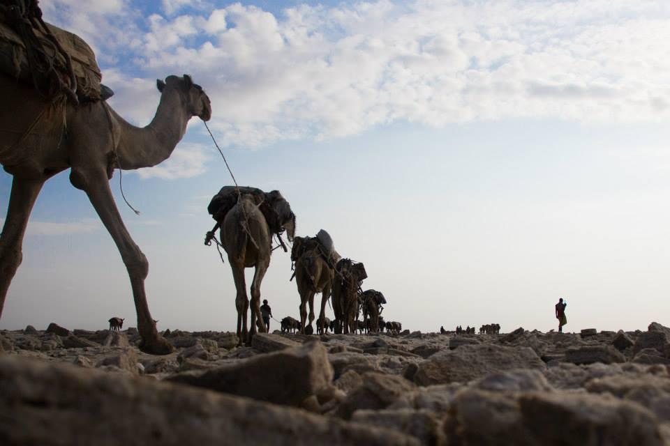 Etiopía - Caravana de la sal. foto Bea García
