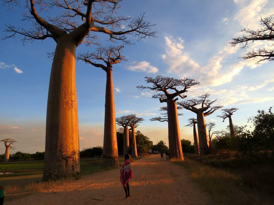 Madagascar - Anochecer entre baobabs. Foto Izaskun Mariñelarena