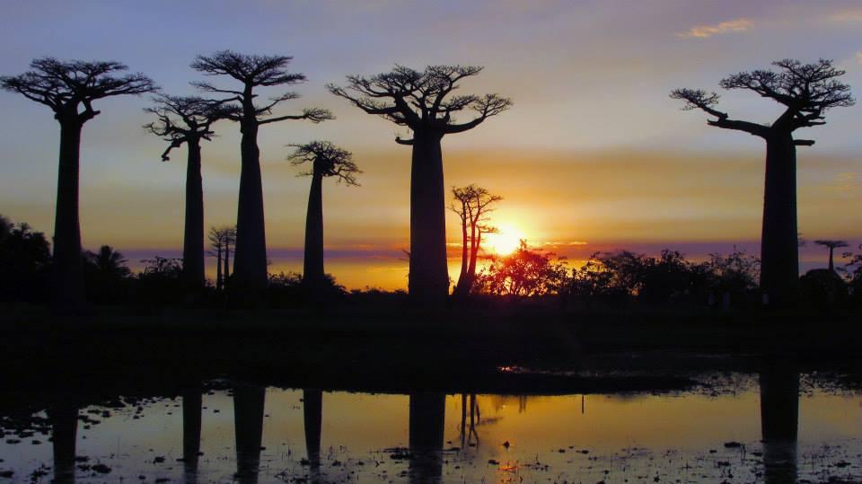 Madagascar - Avenida de los baobabs. Foto Beatriz Perez