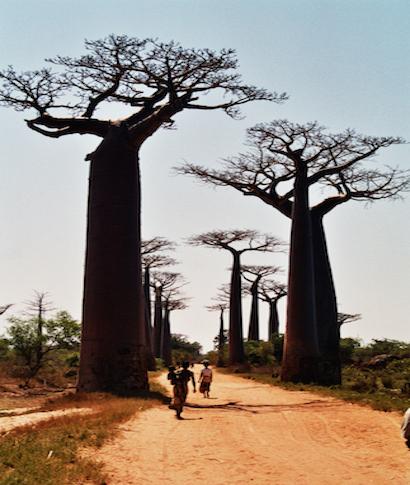 Viajamos a Madagascar y buscamos a alguna persona que pueda contar el día a día del viaje a trav&eacute;s ... <br> <a class='vermellteula'>Seguir leyendo >>></a>