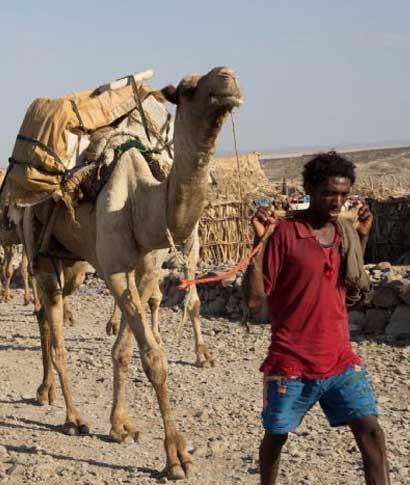 Hablar de Etiopía es hablar de historia entremezclada con leyenda; es observar el abanico paisajístico que ... <br> <a class=´vermellteula´>Seguir leyendo >>></a>