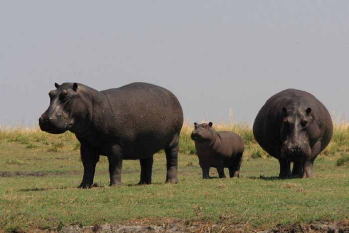fotos de Botswana autor:Karibu Safaris