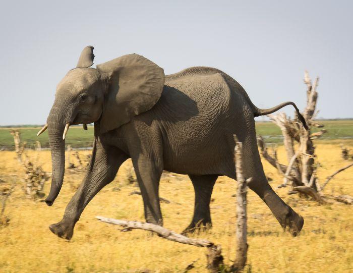 fotos de Botswana autor:Angel Zamarron