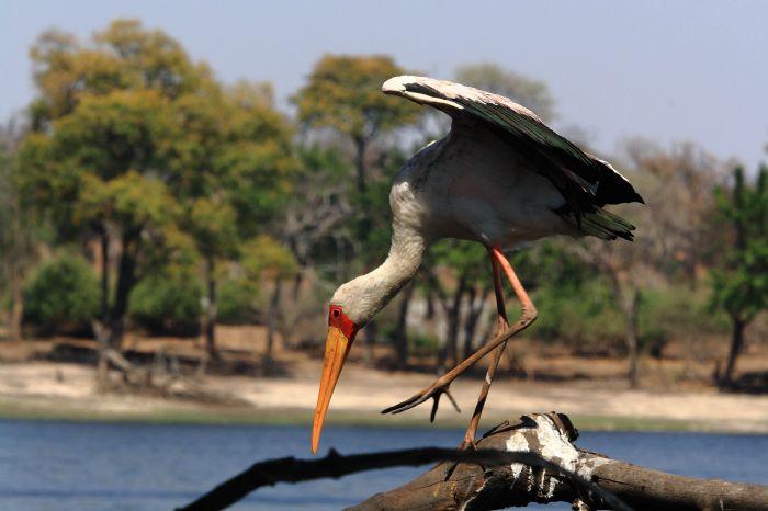 fotos de Botswana autor:Eva Ballano
