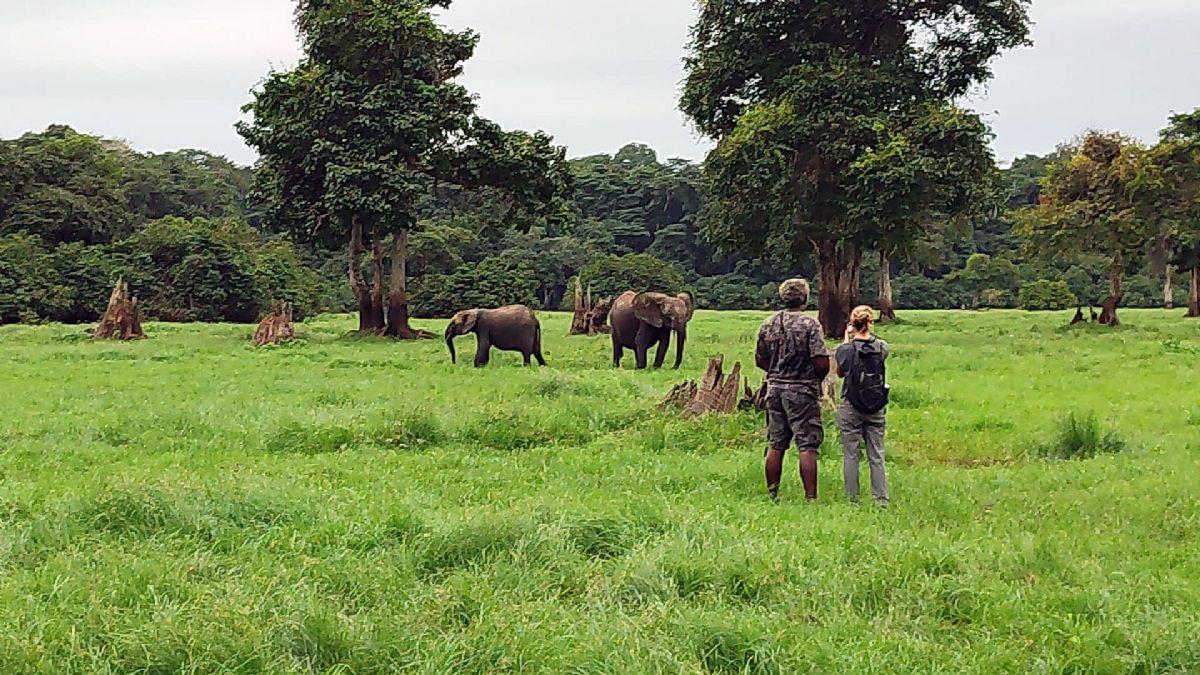 fotos de Gabón autor:Gabon Untouched