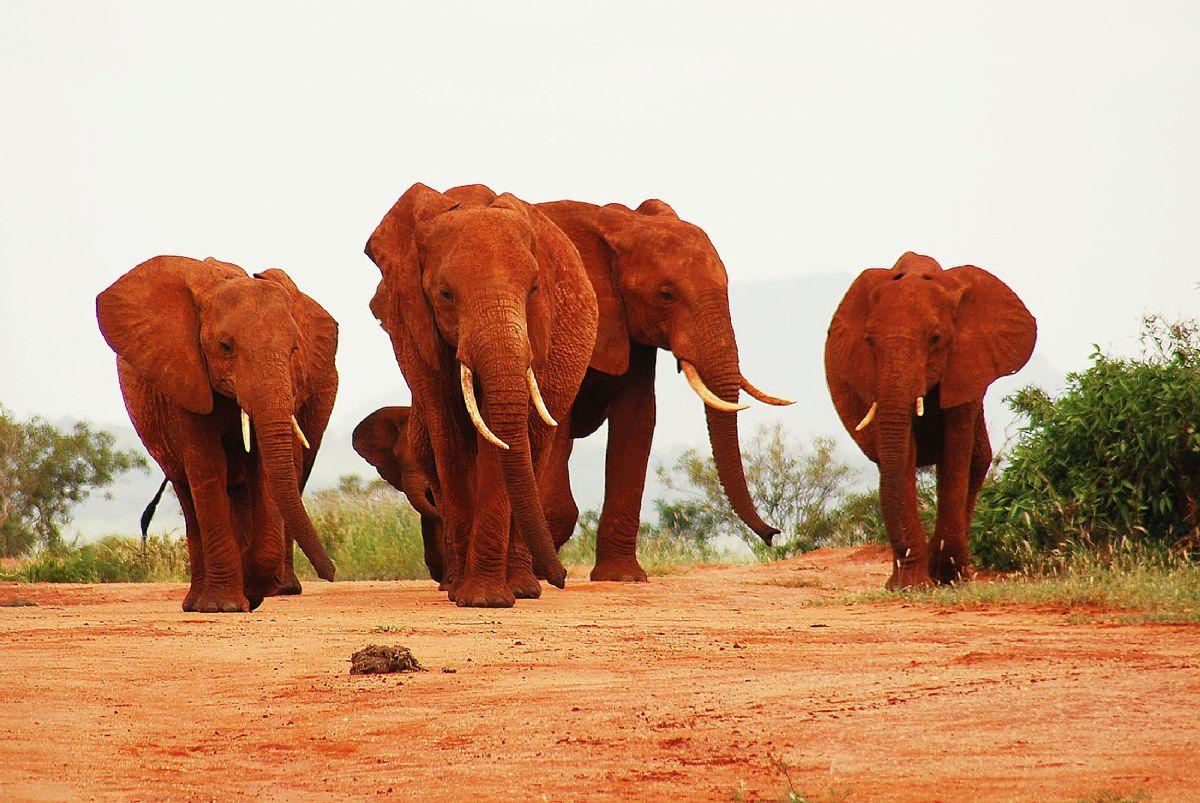 fotos de Kenia autor:Kananga
