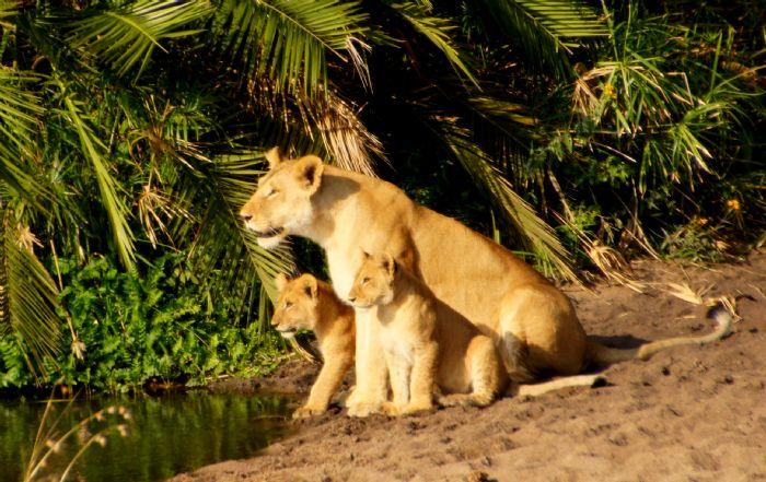 fotos de Kenia autor:JOAN VIDAL