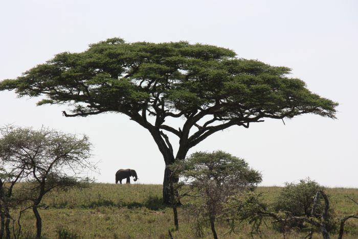 fotos de Kenia autor:Jesus Iturrate