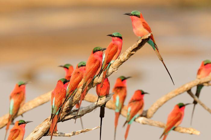 fotos de Malawi autor:Tomás Bordera