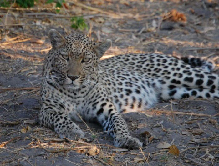 fotos de Namibia autor:O Muntane