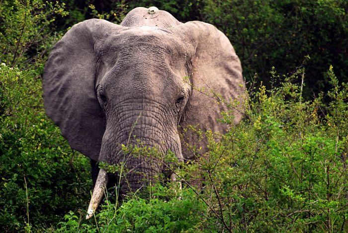 fotos de Rwanda autor:Miguel Marquez