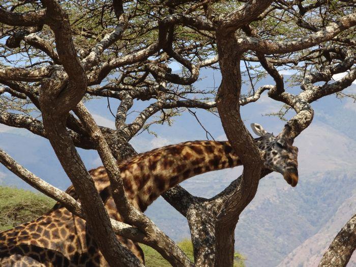 fotos de Tanzania autor:Antonio Porras
