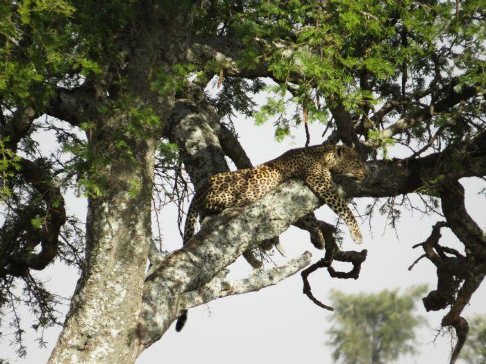 fotos de Tanzania autor:Cecili Tarruella
