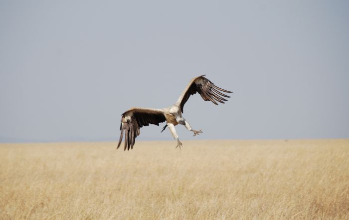 fotos de Tanzania autor:CRISTINA  GALOBARDAS