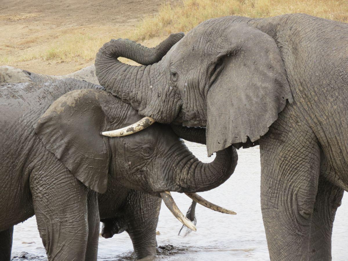fotos de Tanzania autor:Javier Valero