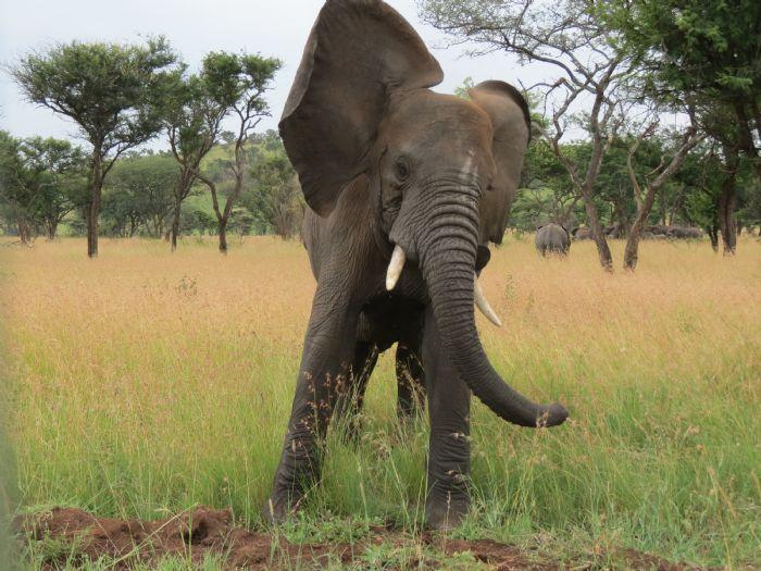 fotos de Tanzania autor:Albert Ferrer