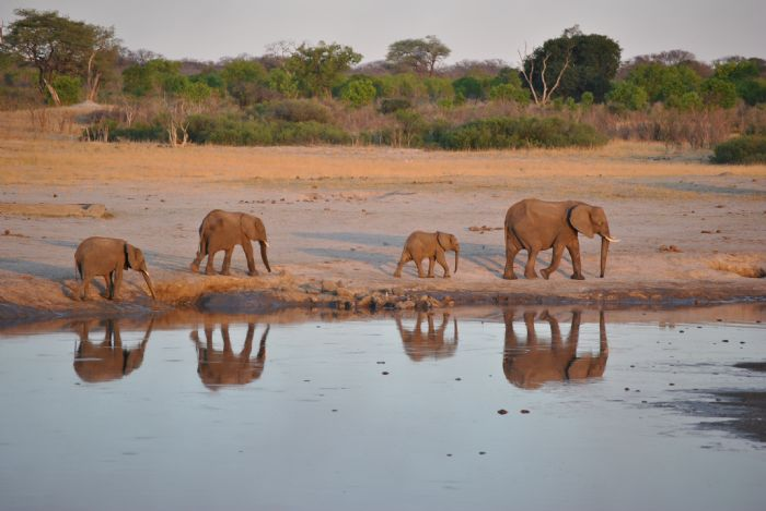 fotos de Zimbabwe autor:Sunway Safaris
