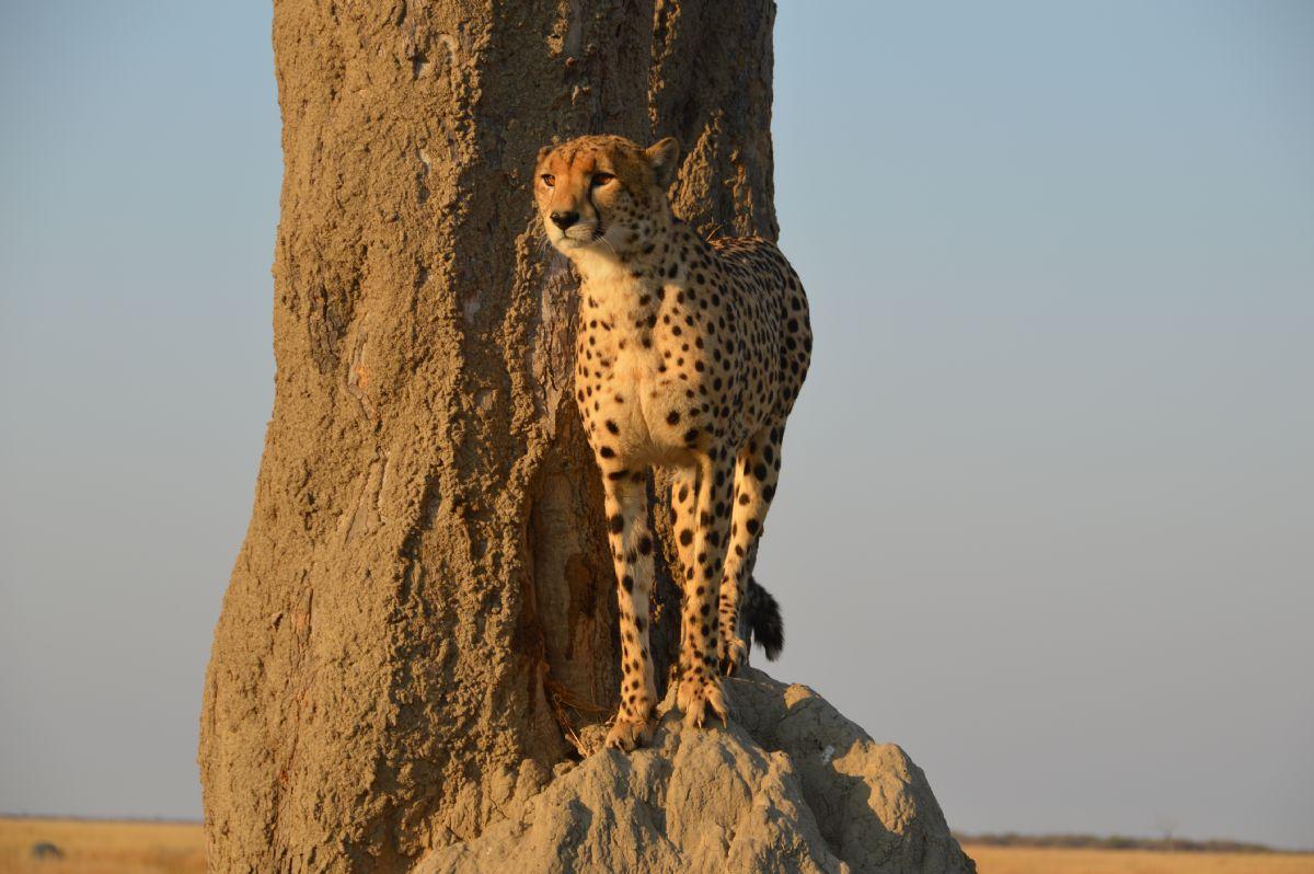 fotos de Zimbabwe autor:Wilderness