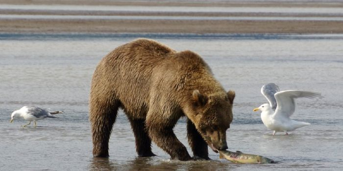 fotos de Alaska autor:A&J