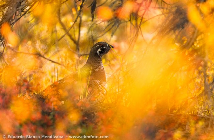 Lo mejor de Yukón y Alaska. Foto J. A. Cano