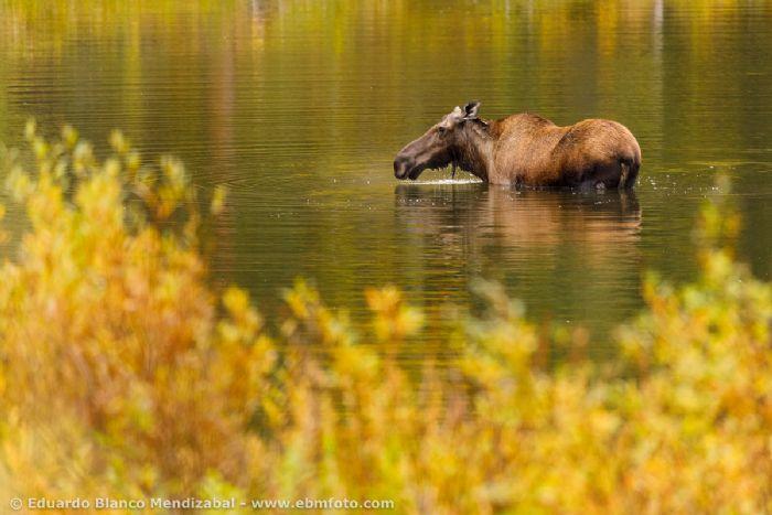 Lo mejor de Yukón y Alaska. Foto J. C. Fdez Lopez