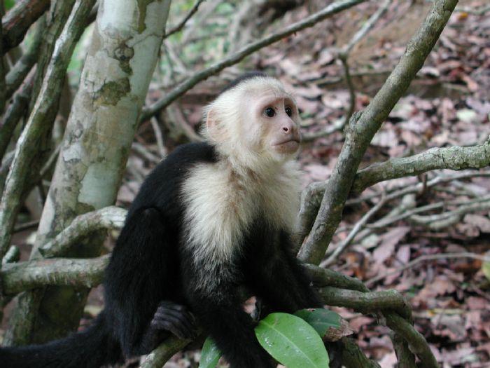 fotos de Costa Rica autor:Rutas Tropicales