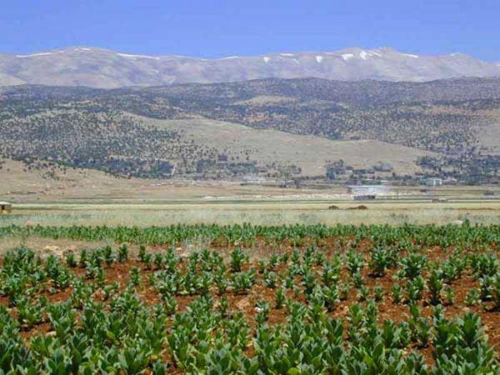fotos de Líbano autor:Susana MURCIANO