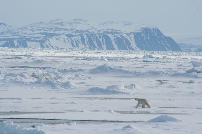 fotos de Ártico autor:R. Olivella