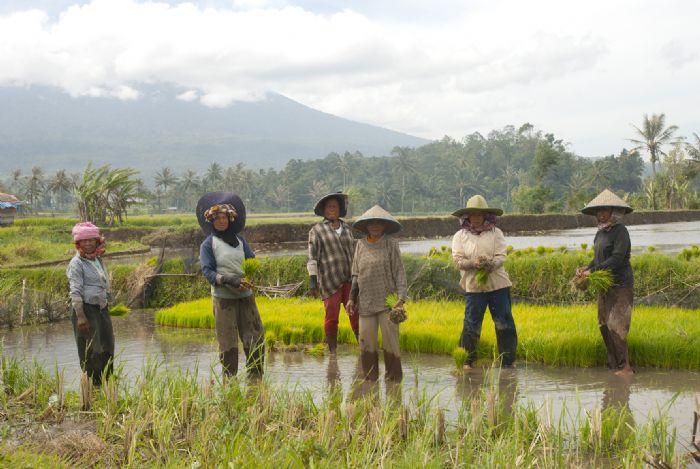Sociedades matriarcales de Sumatra. Foto Anna Boyé