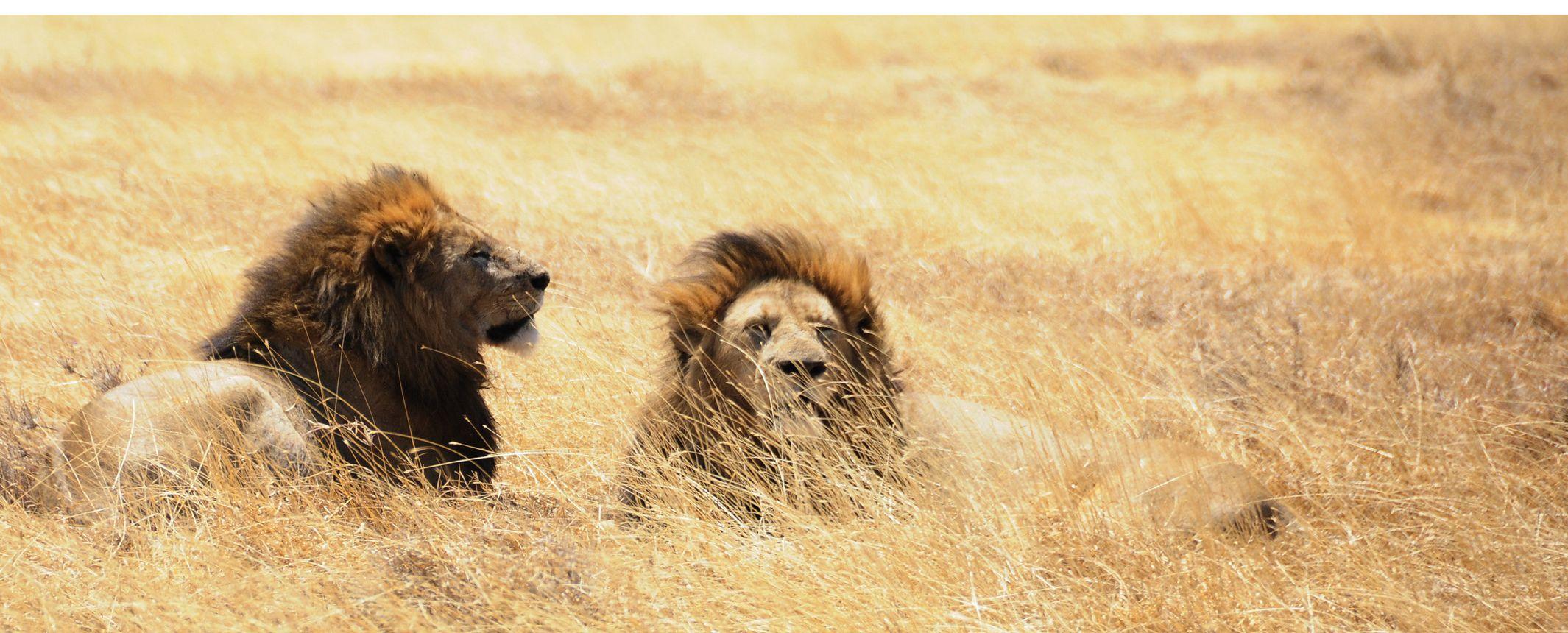 Safaris con estilo. Los Parques del remoto Sur  – Extensión opcional a Zanzibar