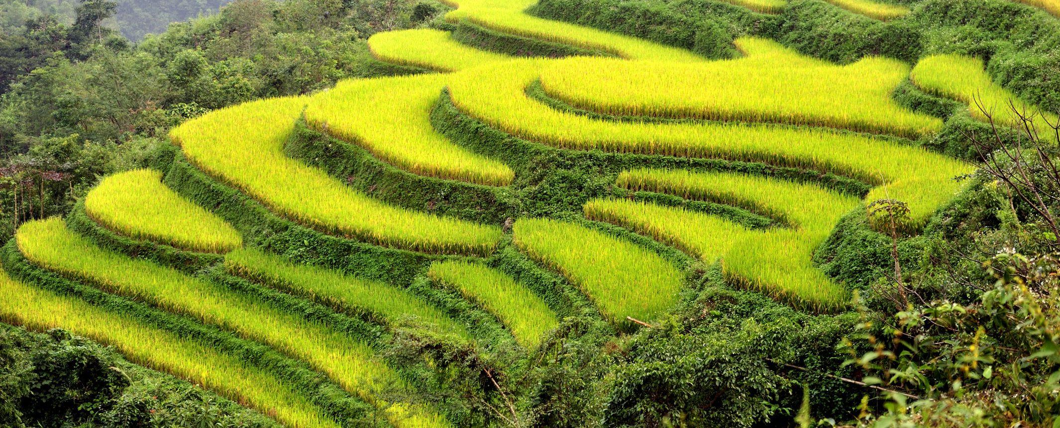 Vietnam y Camboya -  Poblados del norte, Halong Bay, Delta Mekong y Camboya o Isla Phu Quoc - Salidas de Febrero a Mayo