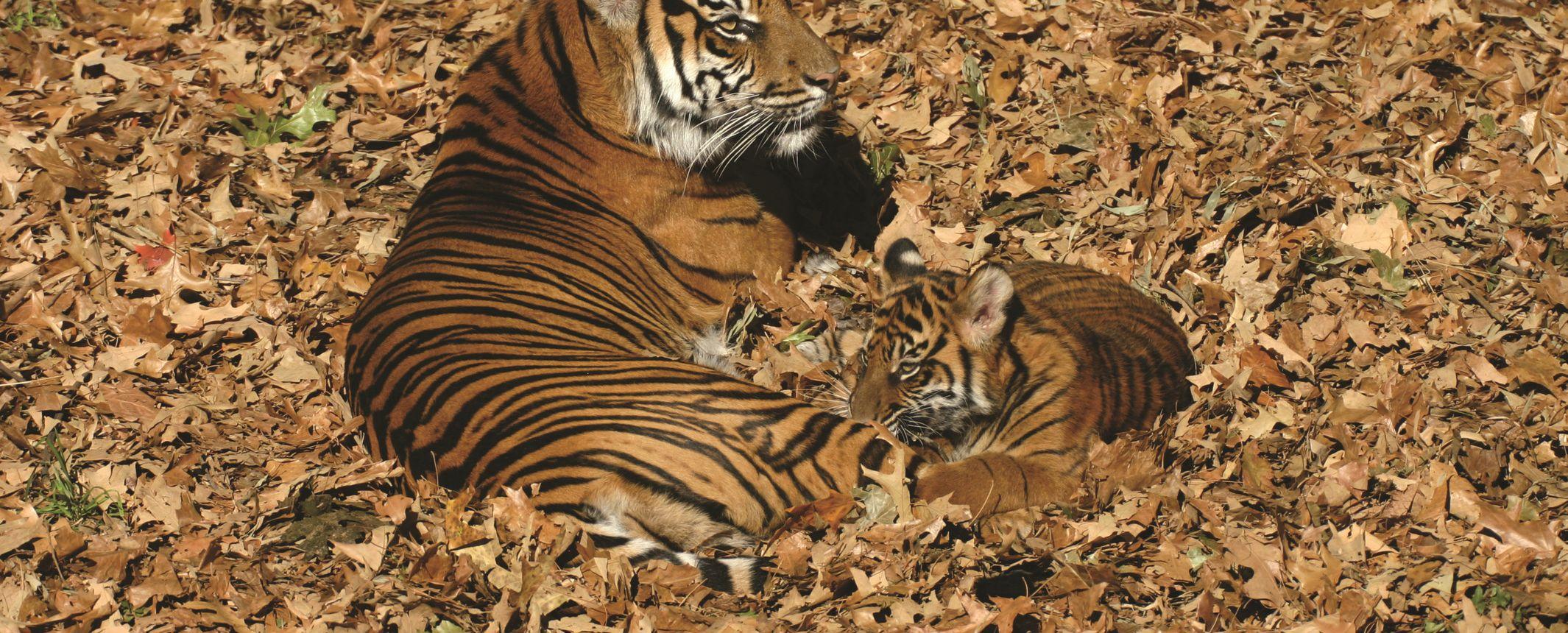 Rajastán y reservas del Norte. En busca del tigre de Bengala  – Especial fin de año.