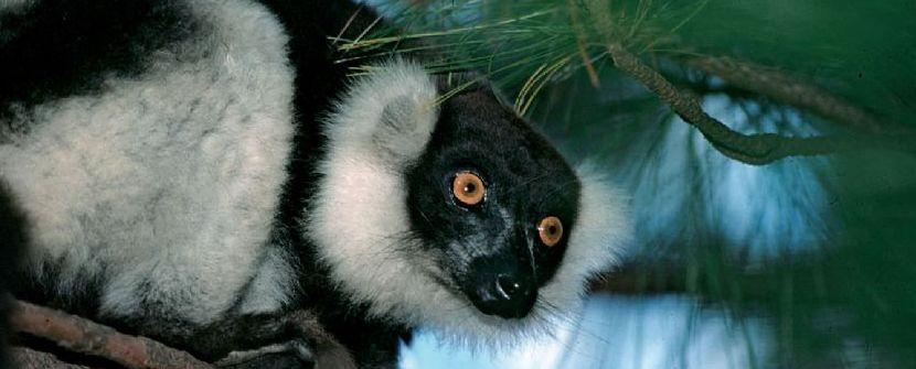 MADAGASCAR. Descubre Madagascar