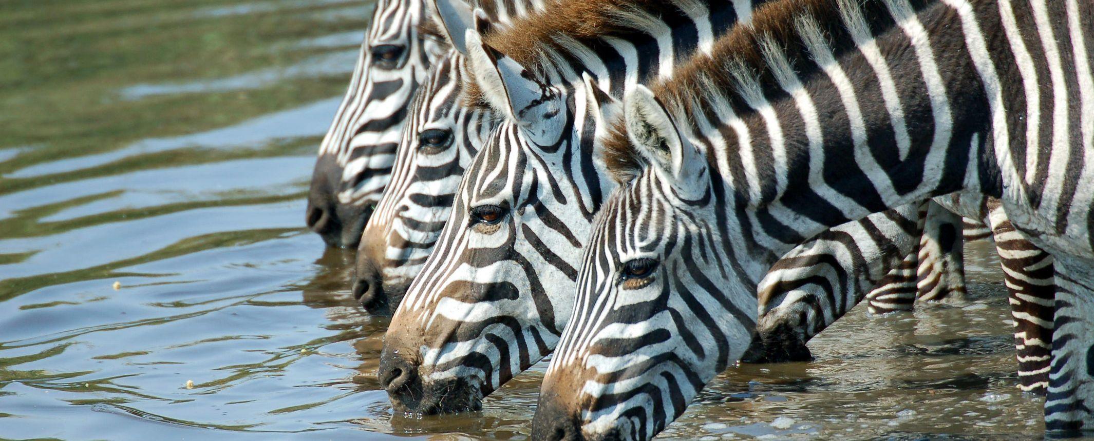 Tanzania -  Reservas del Valle del Rift y Zanzíbar - Salidas de temporada alta con guía de V. Tuareg