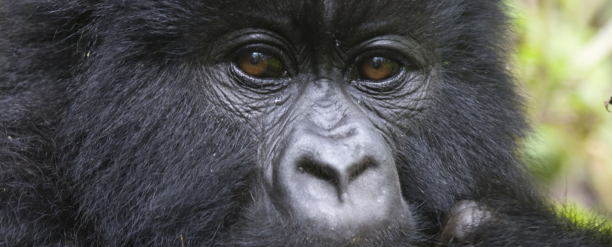 Uganda -  Gorila express - Salidas de enero a diciembre