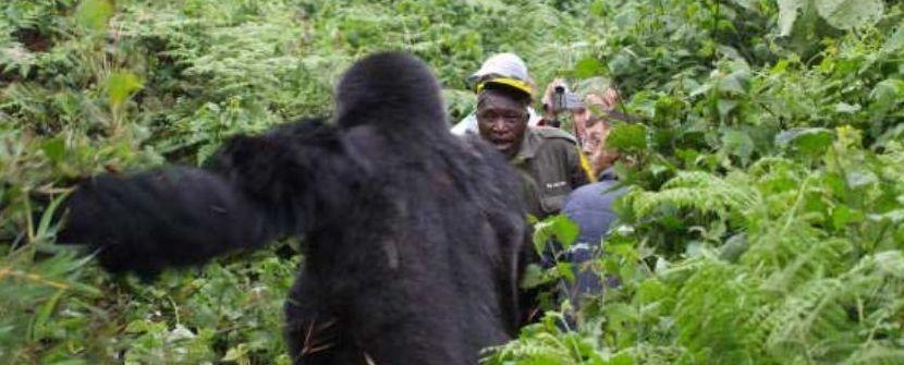 Uganda y Rwanda