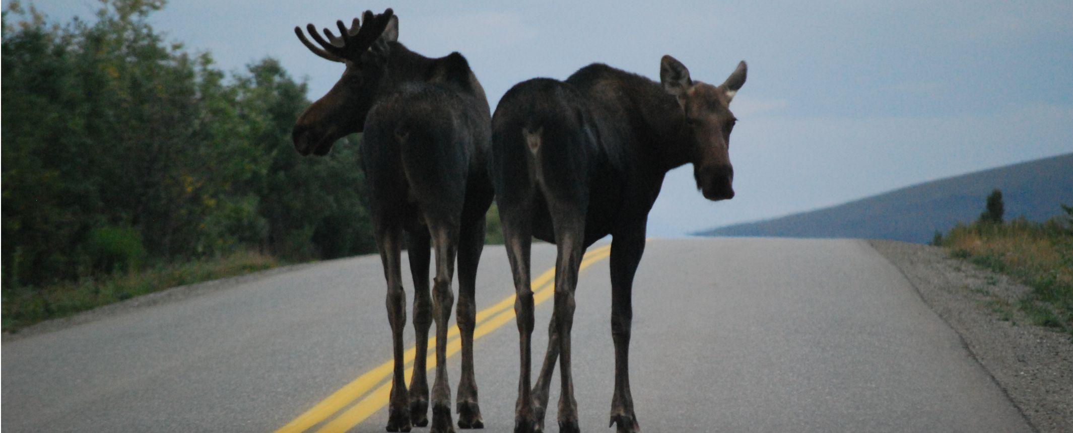 Alaska y Canad�