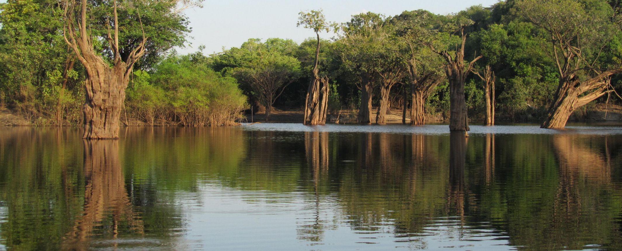 Amazonas, Pantanal, Salvador e Isla de Boipeba  – Salidas de JUL a OCT
